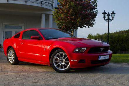 Mustangiem do ślubu - Gdynia - pomorskie